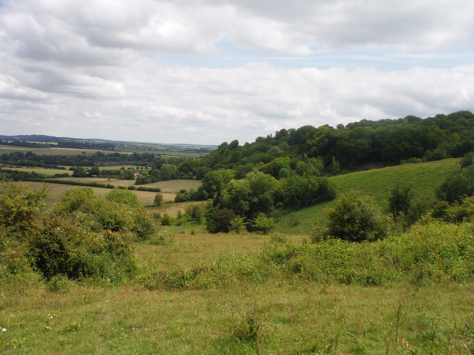 Dry Valley and Smith's Plantation, Broughton Down SWC Walk 265 - Dean to Mottisfont & Dunbridge