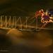 Web of light by hvhe1