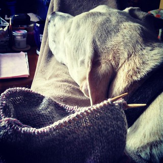 Lazy weekend mornings are the best! #cuddly Zeus and a little #knitting #dogstagram #instadog #ilovemyseniordog #knitstagram #getyourkniton #happydog ##NAPblanket #snuggles