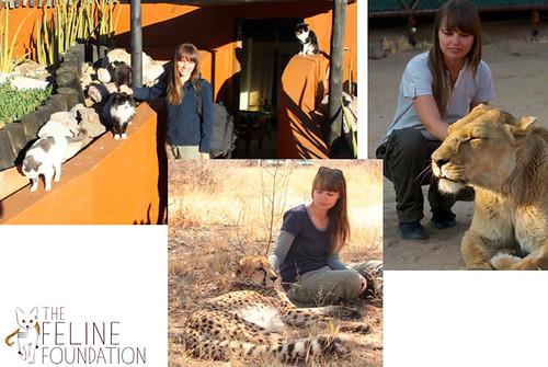 feline-foundation-sarah-11-20-14