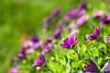 32 - Purple Flowers.jpg