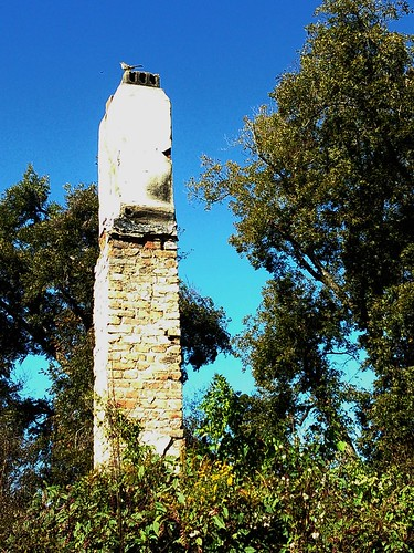chimney & bird