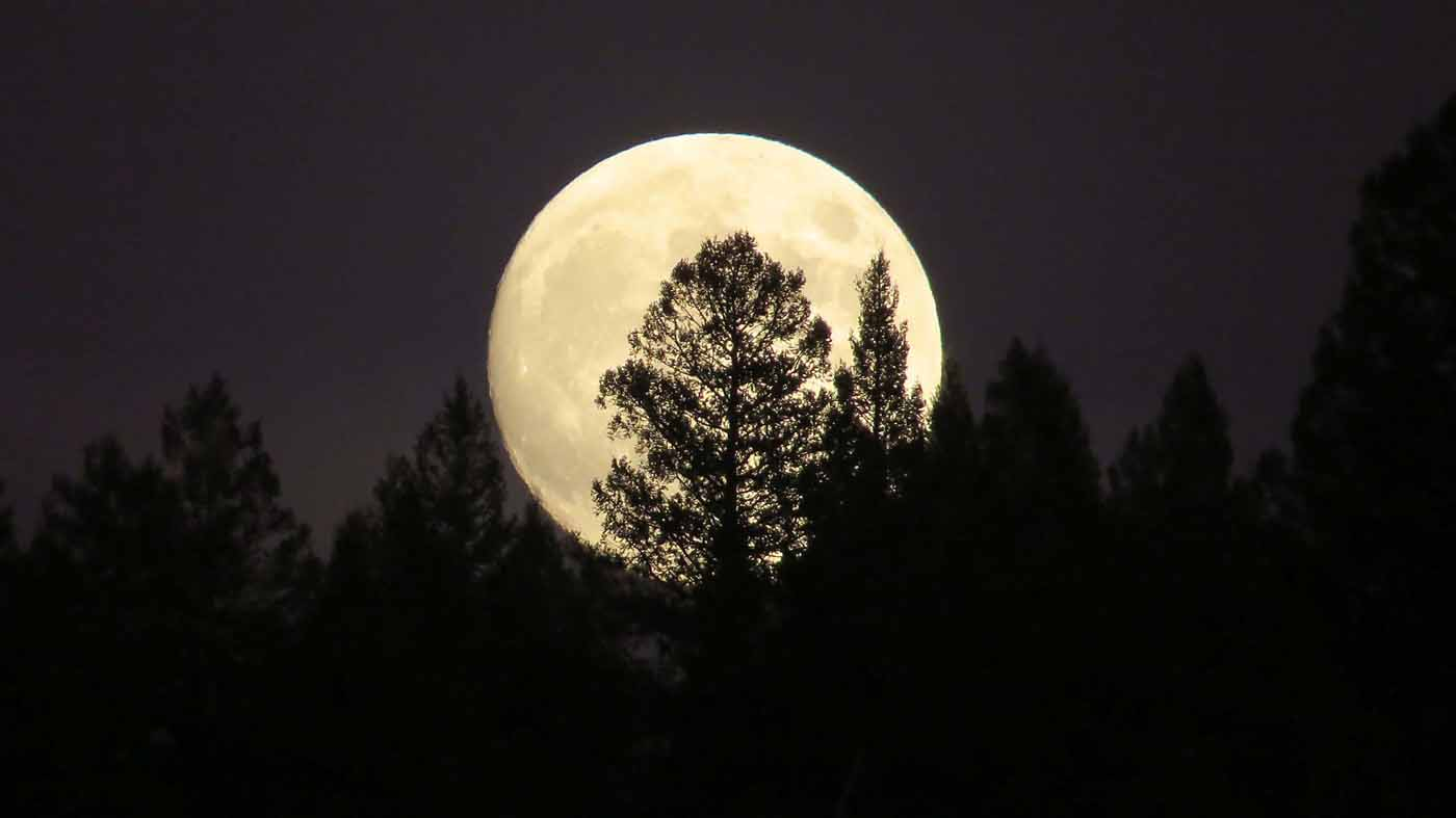 How To See Tonight's 'Perfect' Super Blood Wolf Moon Total ...