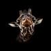 Giraffe by Stephen Bridson