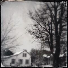 Feels like #winter! #blackandwhitephotography #hipstamatic #house #trees #blackandwhite @eduardontavares