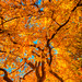 Fall Colors & Golden Leaves by Ian Aberle