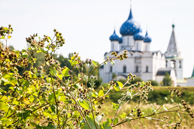 Cathedral of the Nativity view from weedy path, Suzdal スズダリ、雑草の小径から見たラジヂェストヴェンスキー聖堂