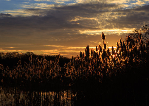 sky sun nature water grass silhouette clouds sunrise landscape dawn newjersey unitedstates nj marsh southriver