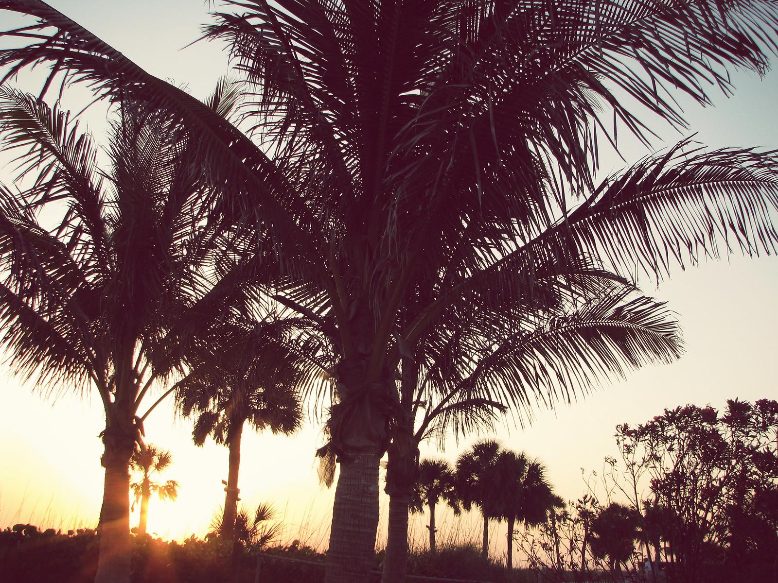 IMG_1732_palms