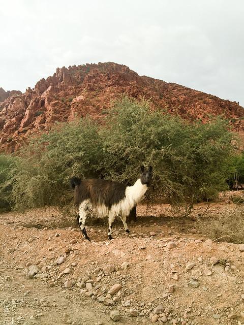 Sallar near Tupiza, Potosí Region, Bolivia