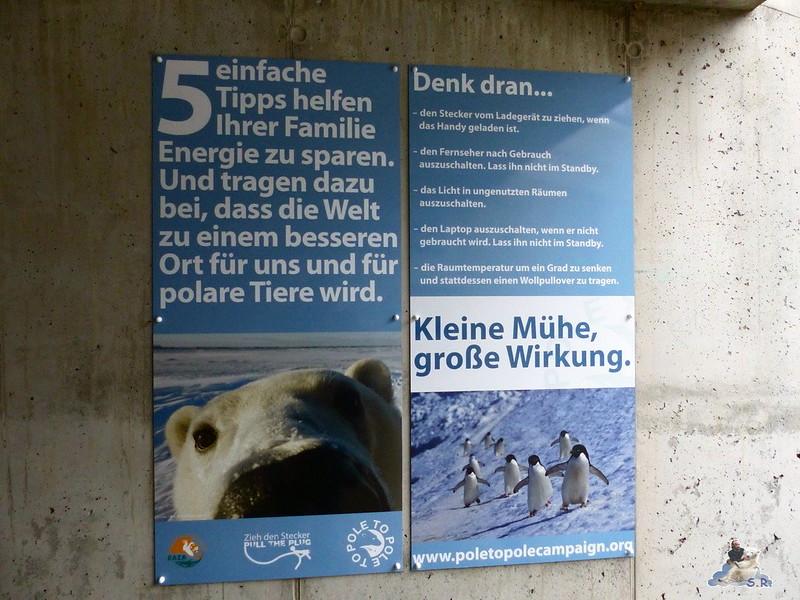 Tierpark Berlin Eisbären 20.12.2014 7
