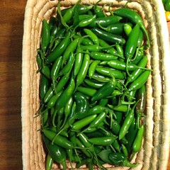 recipe: how many habaneros in a pound [31]