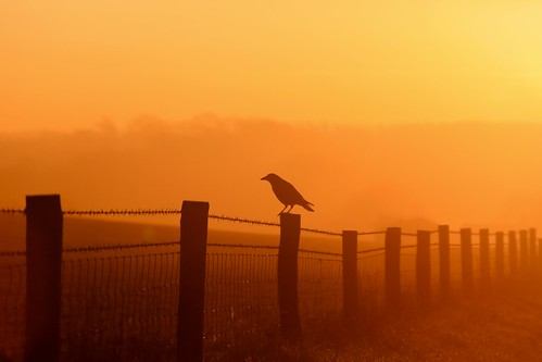 sun bird sunrise fence wire december alba buckingham barbed 2014