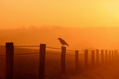 sun bird sunrise fence wire december alba buckingham barbed 2014