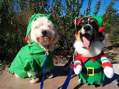 Max & Austin want to be Santa's elfs