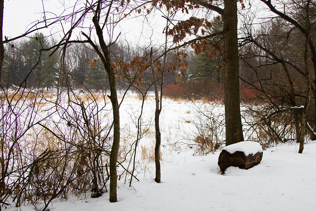 Spatterdock Pond