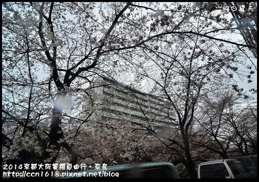 2014京都大阪賞櫻自由行.奈良DSC_0801