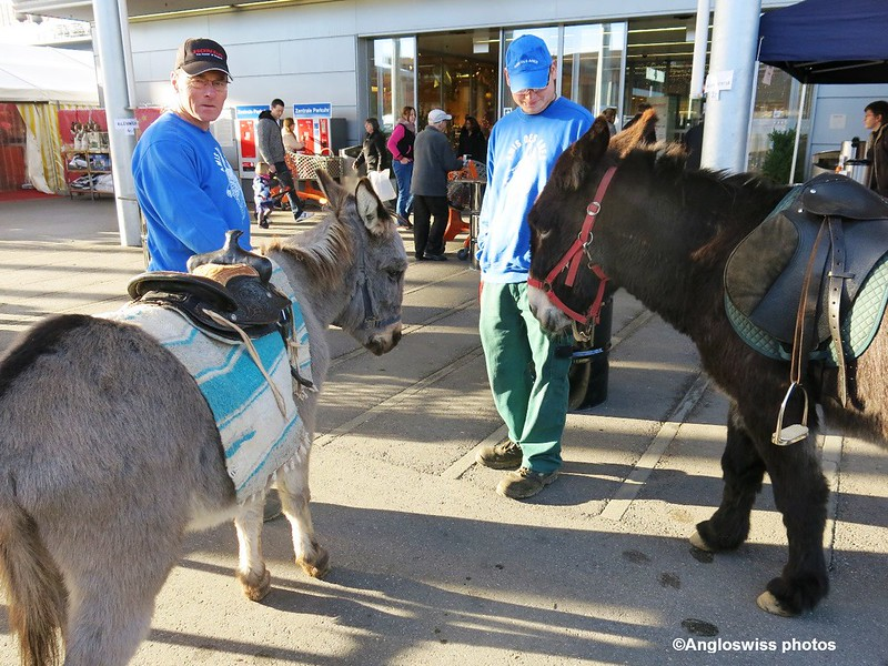 Donkeys at Migros Langendorf