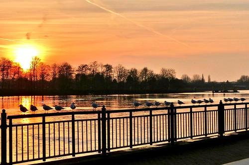 sunset river germany de explore bremen weser inexplore sonnenunterganganderweser sunsetattheriverweser explore20150108