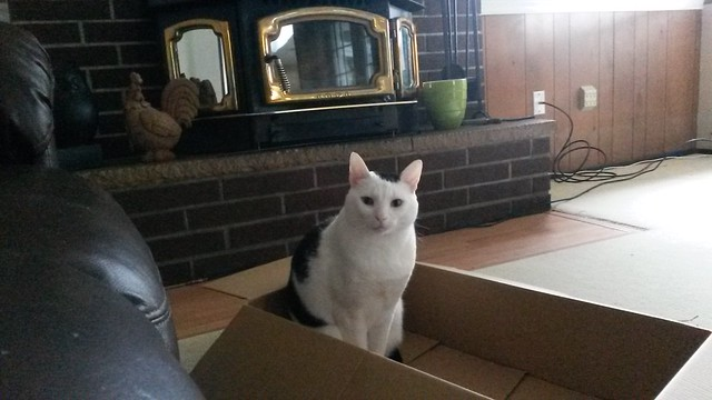 The box of judgment