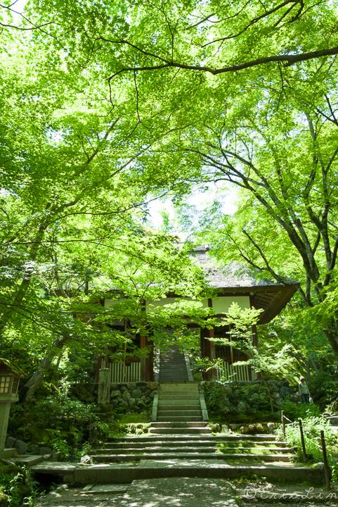 PENTAX K-1 的綠--京都新綠