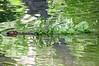 Beaver Science Lake ASP