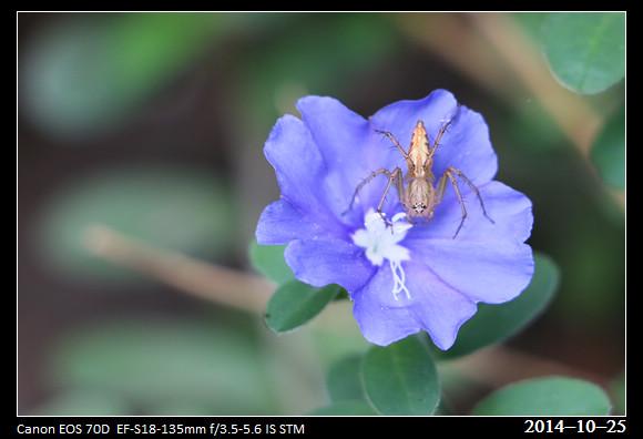 20141025_Flower1
