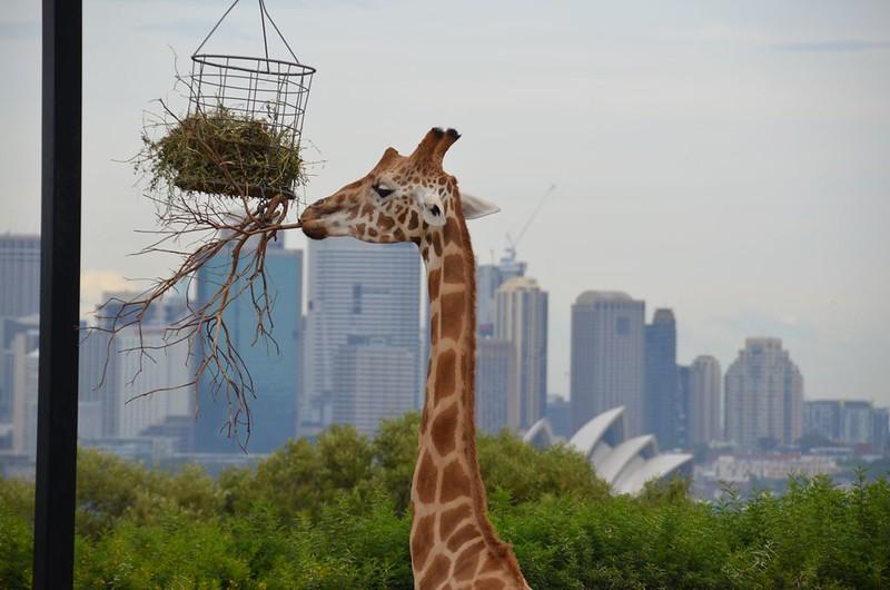Uni Collections 12 Inch Travel Tote Bag Giraffe Black -Black Trim