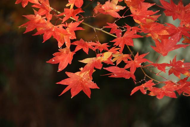 高尾山 日本的紅叶 - naniyuutorimannen - 您说什么!