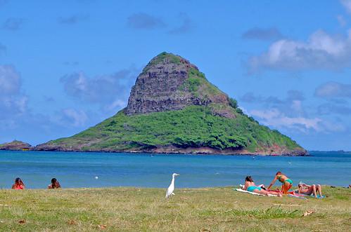 sea vacation people bird island hawaii oahu leisure egret kualoa mokolii bubulcusibis pentaxk30