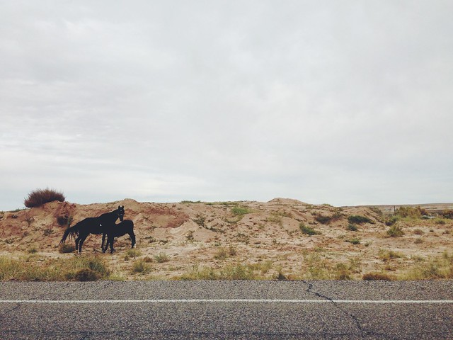 nursing horsies on arizona roads