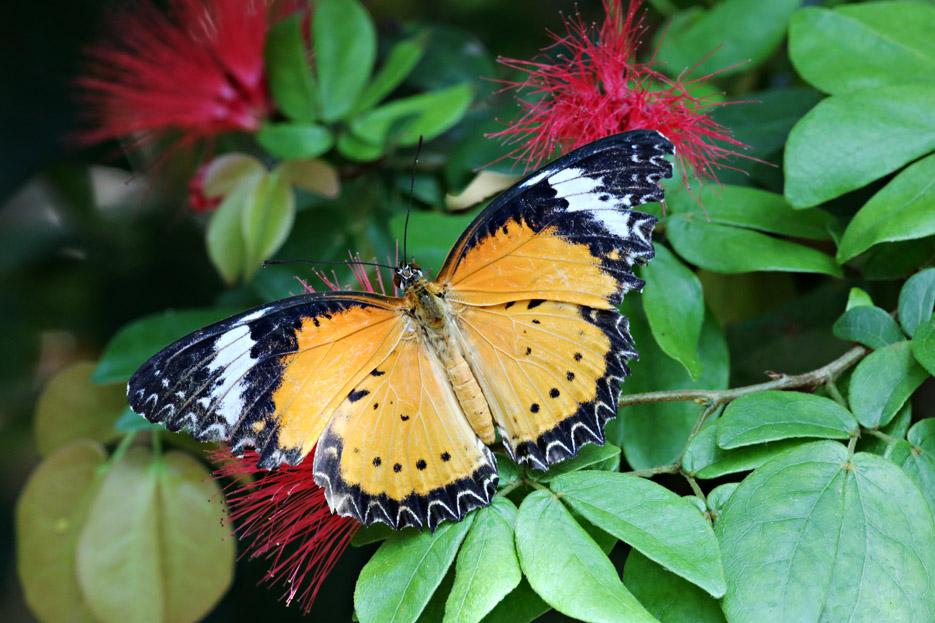 091014_01_butterfly07