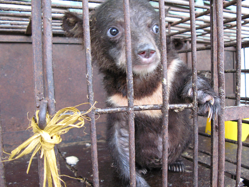 Mara after rescue in 2007