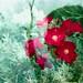 Labbra rosse di fiore