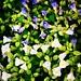 #BomDia #flores do dia!  #flowers