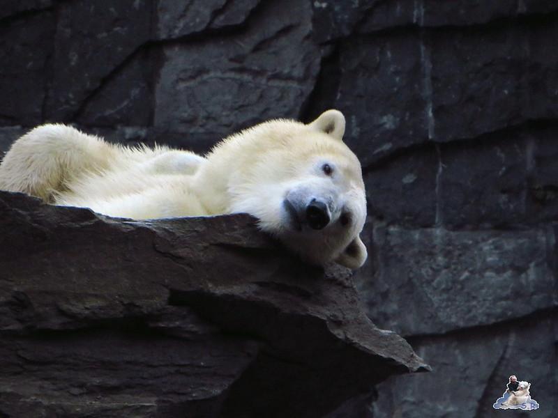X Tierpark Berlin Eisbären 20.12.2014 89