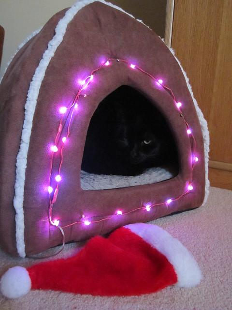 Christmassy Flo 2014 (5)