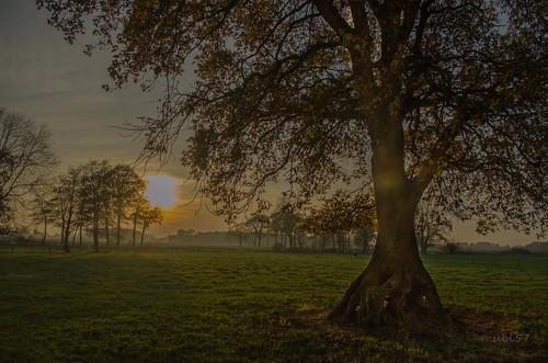 sunset oak sonnenuntergang emsland eich