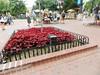 TownJuly28-2014  :     DSCN2654