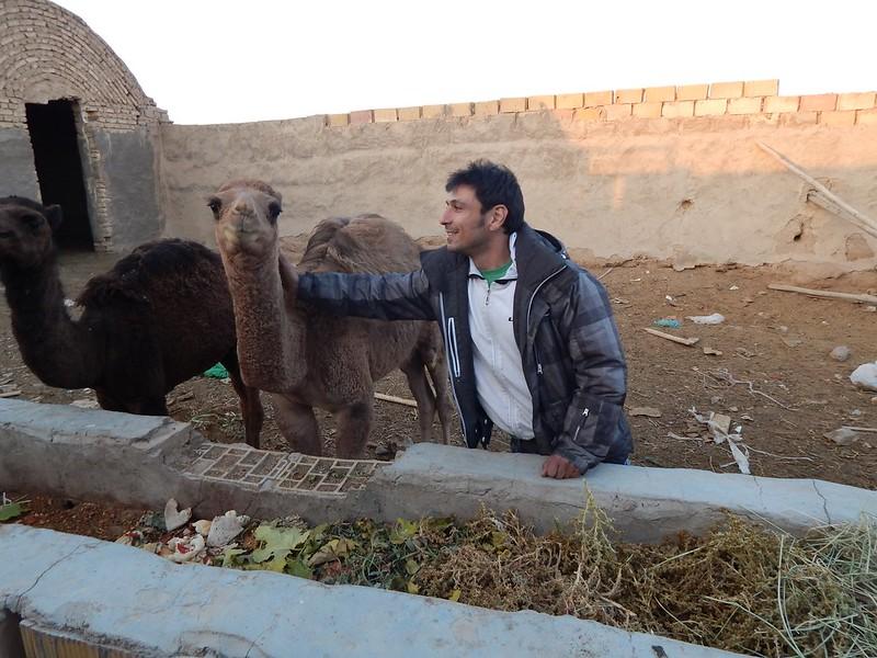 141128 Fahraj Camel (17) (2304 x 1728)