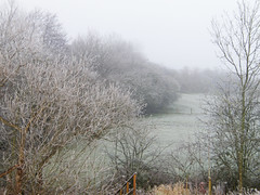 New Year's Frost