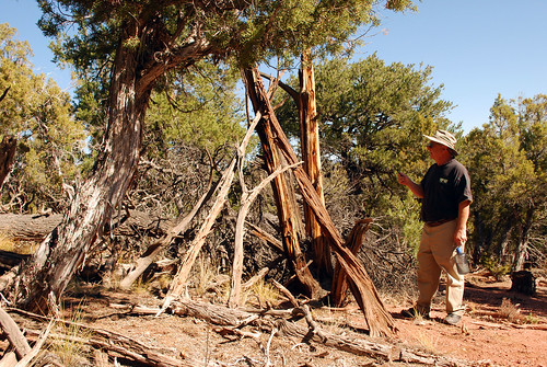 The remains of a free-standing wickiup is inspected in Mesa County, Colorado. Wickiups were used by the Ute Mountain Ute Tribe of southwestern Colorado and are still in use for ceremonial purposes. (Photo courtesy Dominguez Archaeological Research Group)