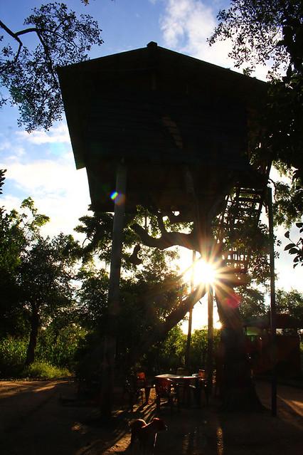 Treehouse - Diviya Safari Camping, Yala National Park