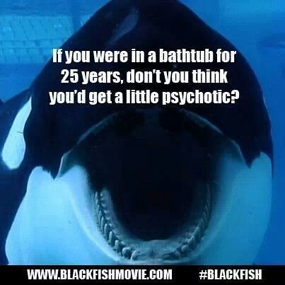 Blackfish Documentary - Free Whales in Captivity