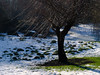 Tree in the Snow by craesh