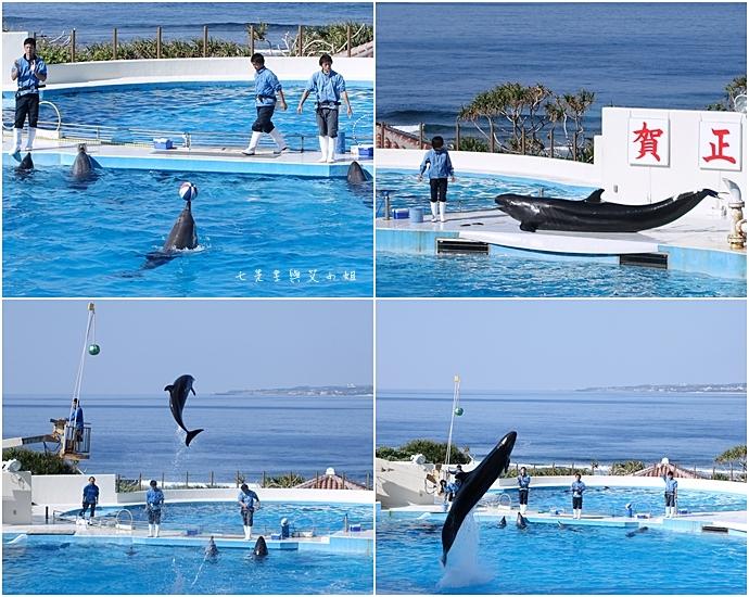 11 日本沖繩五天四夜租車自由行 美麗海水族館