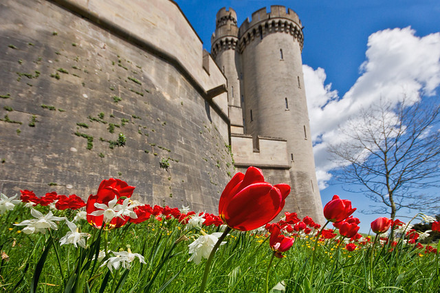 Castle and Tulips Arundel
