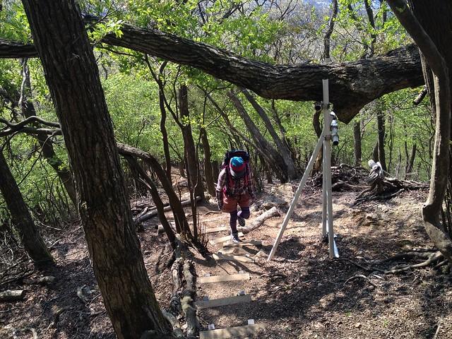 錫杖ヶ岳 加太コース 倒木ブロック