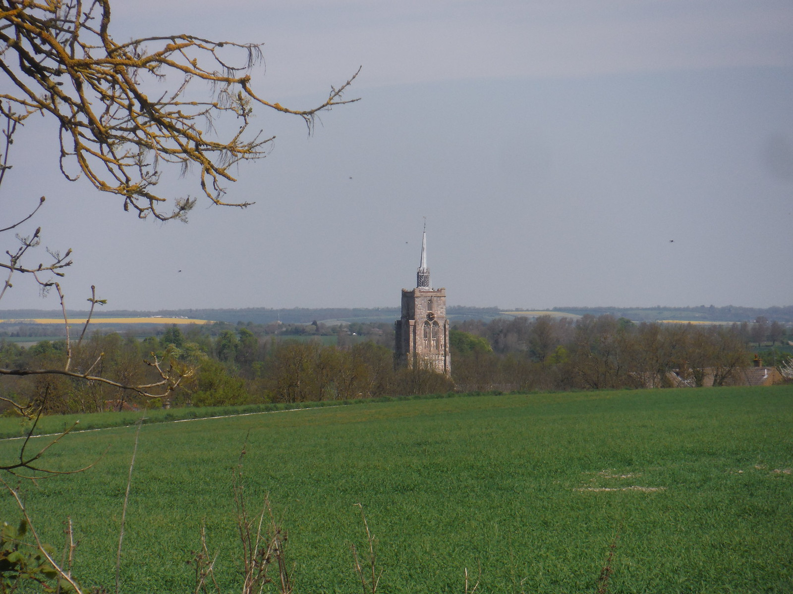 Ashwell Church Spire from Field SWC Walk 91 - Baldock Circular