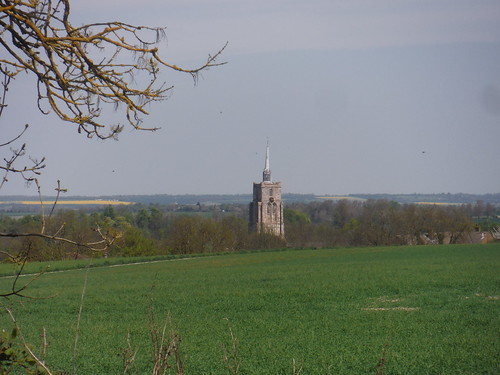 Ashwell Church Spire from Field